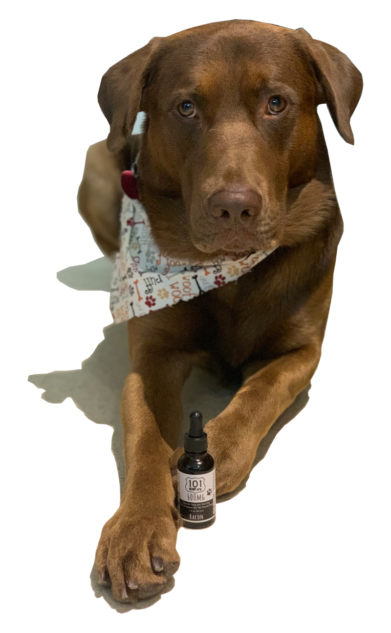CBD for Dogs Ozzie with Oil