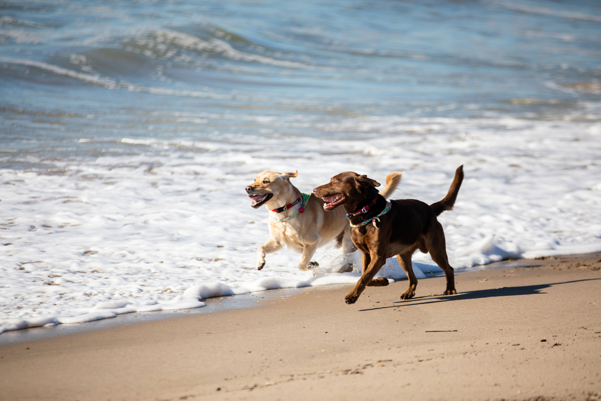 CBD for dogs at beach